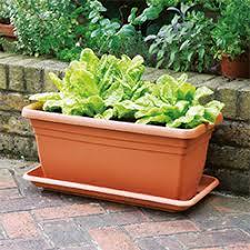pots-garden.jpg